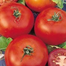 19-tomate-saint-pierre