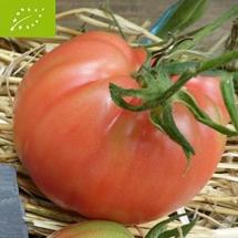 5-tomate-rose-de-berne