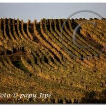 Automne dans le vignoble alsacien10