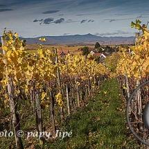 Automne dans le vignoble alsacien14