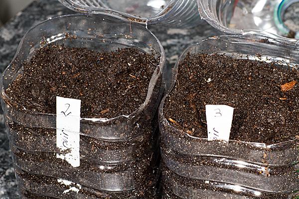 Remplir de terre, semer et étiqueter