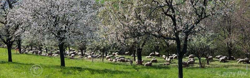 A quelques kilomètres En Forêt Noire