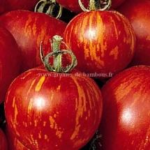 1-tigerella-tomate