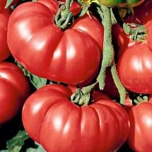 13-tomate-omar-s-lebanese