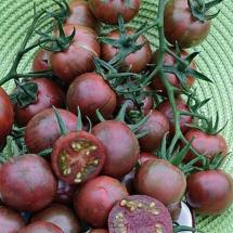 9-tomate-purple-bumble-bee