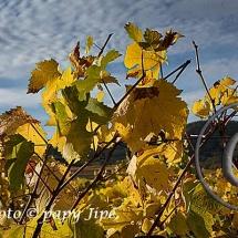 Automne dans le vignoble alsacien13