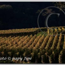 Automne dans le vignoble alsacien8